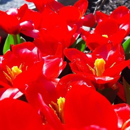 Orto botanico, esplode la primavera I fiori sbocciano per tutti sui social