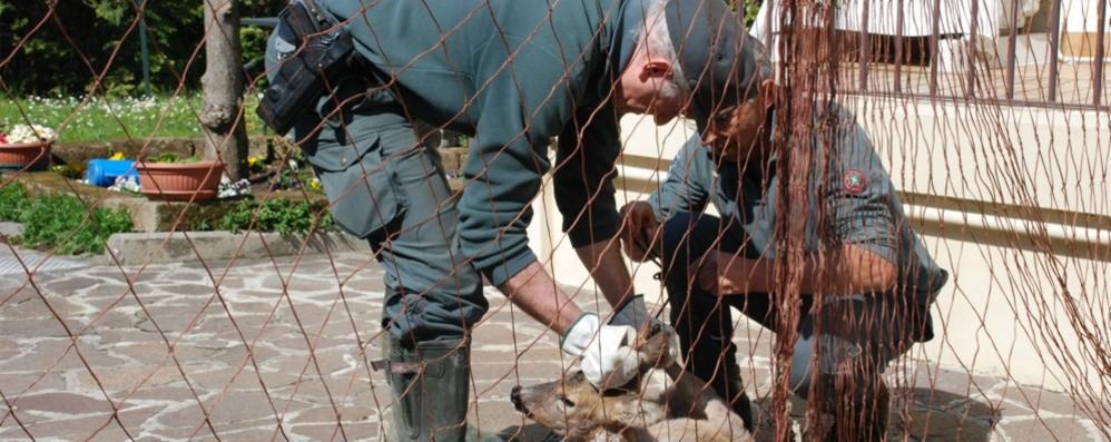 Controlli antibracconaggio: due denunciati La pesca e la caccia non sono consentite