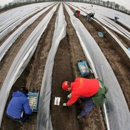 I lavoratori in nero e sfruttati nei campi La giustizia negata