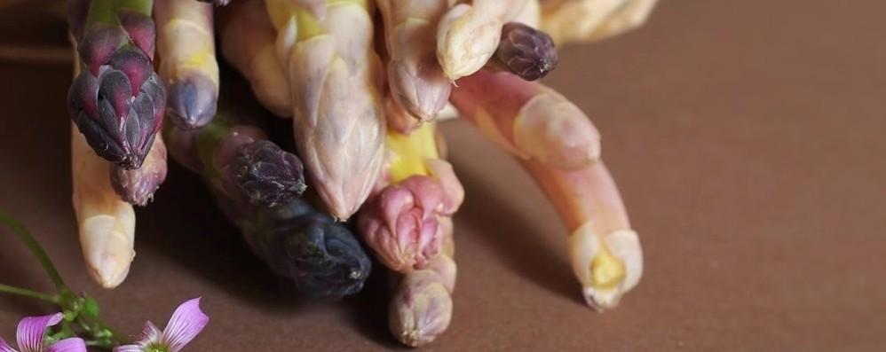 L'asparago di Mezzago