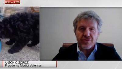 Cani e gatti non possono trasmettere il virus