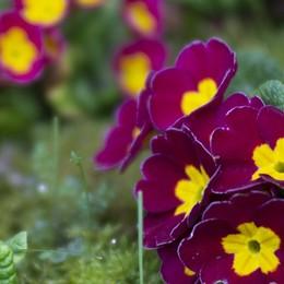 I colori della primavera