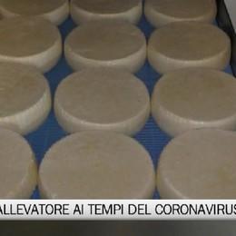 Valle del Lujo, vita da allevatore ai tempi del coronavirus