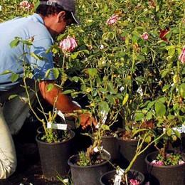 Via libera alla manutenzione del bosco Ok a cura verde e vendita dei fiori