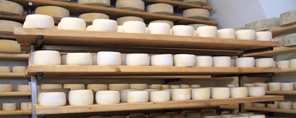 Mipaaf, via libera a richieste per ammasso formaggi