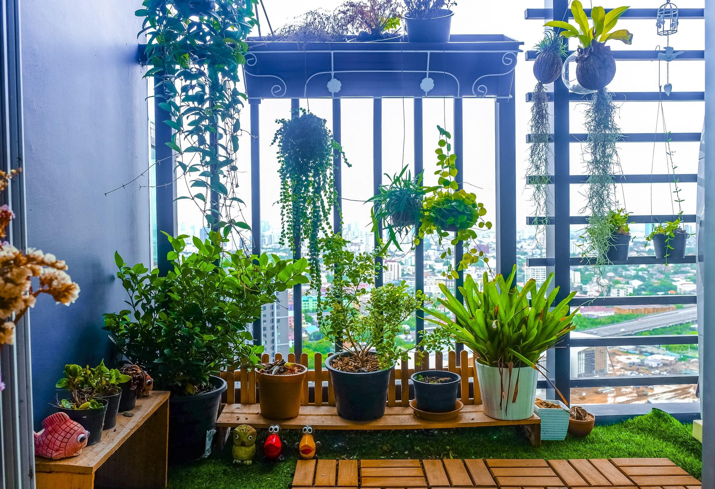 Come Far Morire Una Pianta verdure, erbe aromatiche, micro-ortaggi e piante da interno