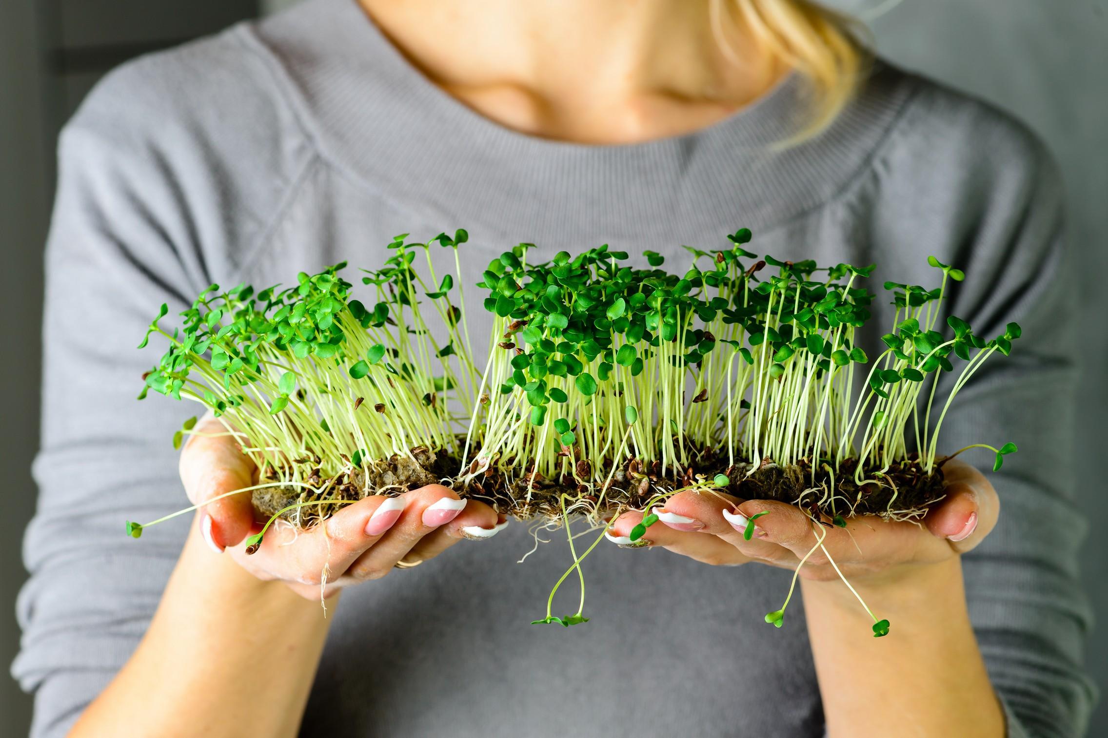 Coltivare In Casa Piante Aromatiche verdure, erbe aromatiche, micro-ortaggi e piante da interno