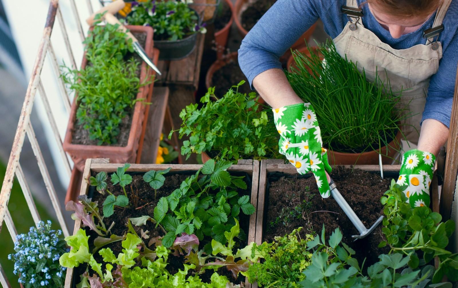 Come Seccare Le Piante verdure, erbe aromatiche, micro-ortaggi e piante da interno