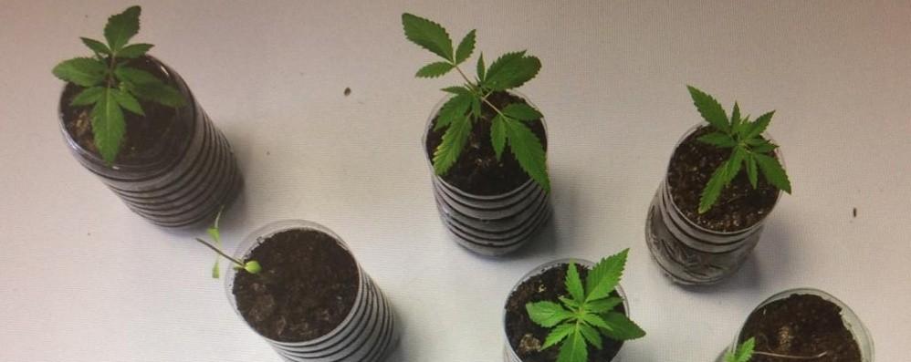Cane mangia foglie di marijuana Due fratelli litigano e si inguaiano