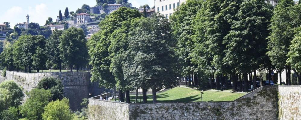 Check up per 75 alberi: 59 sulle Mura Screening per individuarne la stabilità