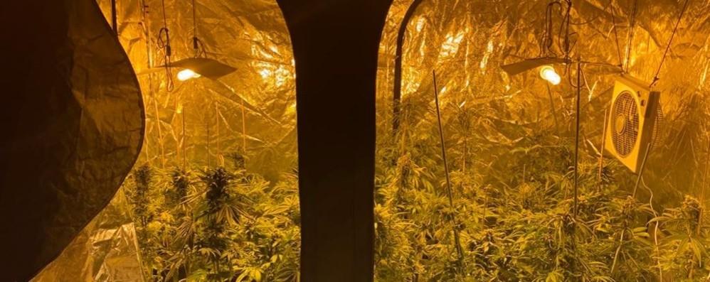 Serre di marijuana in un appartamento Un 45enne di Barzana ai domiciliari