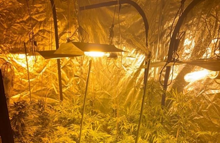 Serra di marijuana in un appartamento  a Barzana