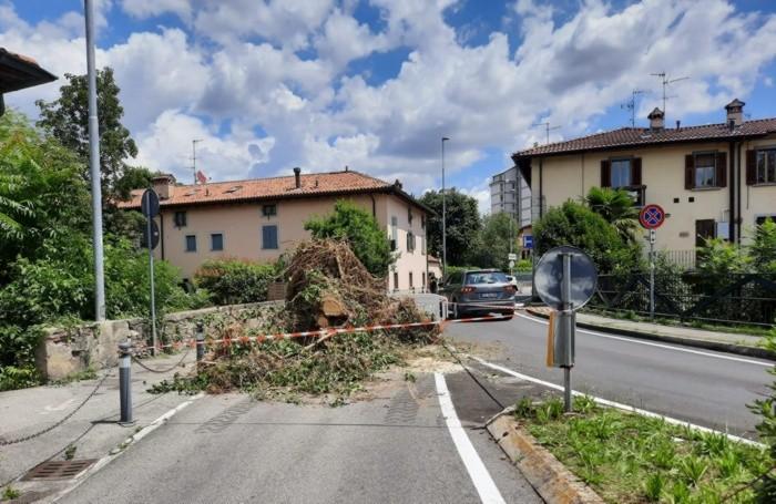L'albero caduto in via Vittorio Emanuele a Ponte San Pietro