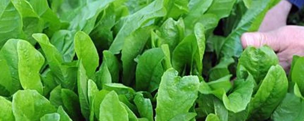 Novità eco per orto Bellina Busta biodegradabile per l'insalata