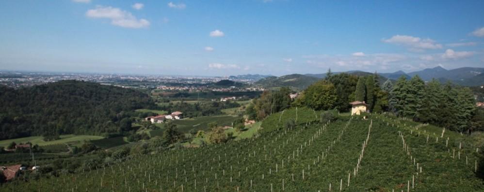Bergamasca, vendite di vino al -50% Il Valcalepio propone patto con i ristoratori