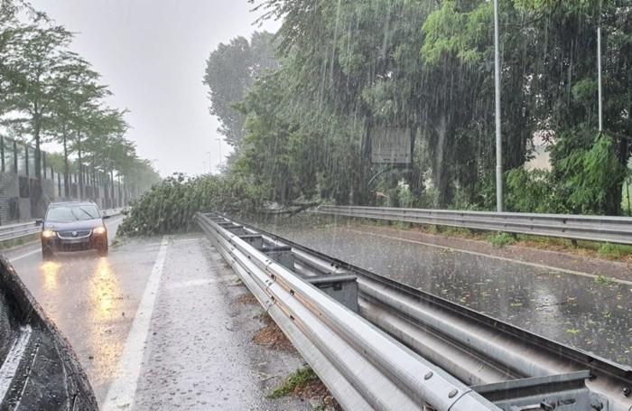 La Circonvallazione Paltriniano con un albero caduto sulla strada