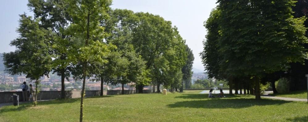I parchi diventano biblioteche all'aperto Bergamo, dal 3 luglio «aule» per studiare