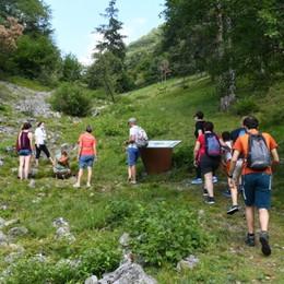 Valle del Freddo: scoprire la flora alpina restando a bassa quota