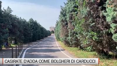 Casirate d'Adda come Bolgheri, si riqualifica il viale dei cipressi