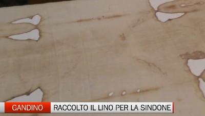 Gandino: raccolto il lino per le copie della Sindone