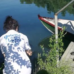 La Goletta dei laghi nel Sebino Sponda orobica ok, acque eccellenti