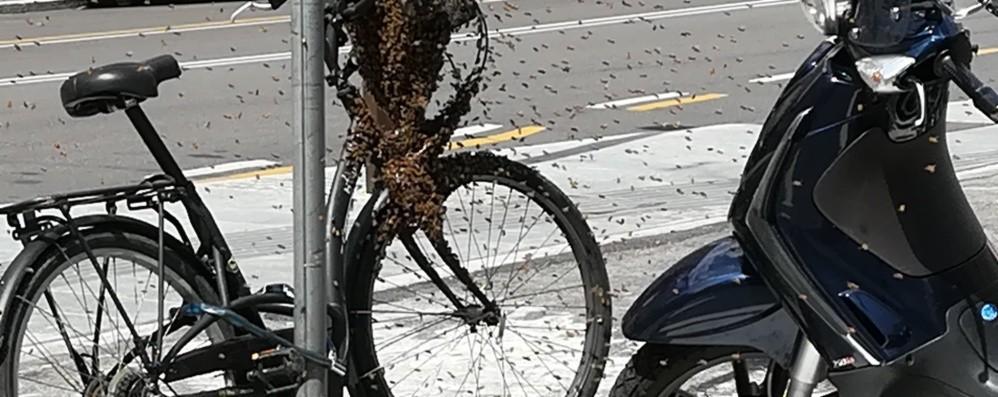 Sciame di api in via Tiraboschi In azione un apicoltore - Foto