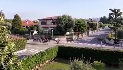 Cavernago, gli asini invadono il paese