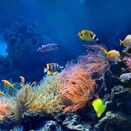 Particelle di plastica dei processi produttivi fuori da mari e oceani