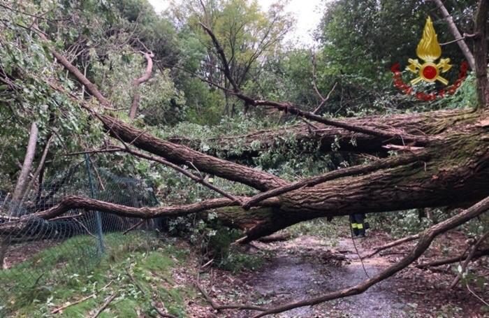 L'albero rimosso dai Vigili del fuoco