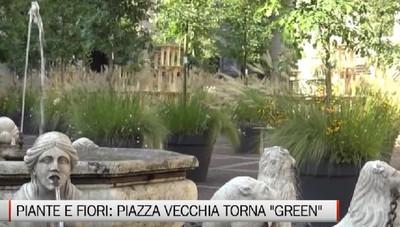 Fino al 20 settembre piazza vecchia torna green