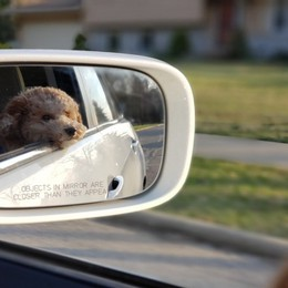 I cani e il mal d'auto Un disturbo comune