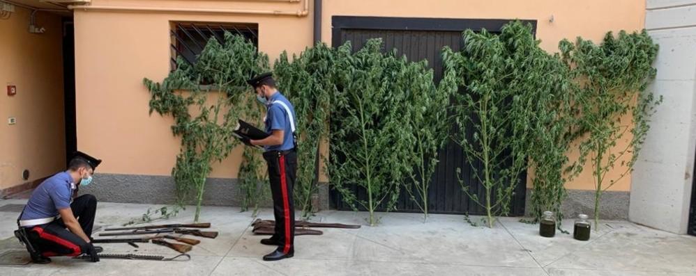Lite per la siepe, arrivano i carabinieri In casa 4 fucili e marijuana: arrestato
