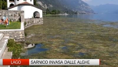 Lago d'Iseo, Sarnico invasa dalle alghe