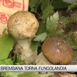 Valle Brembana, torna Fungolandia da sabato 5 settembre