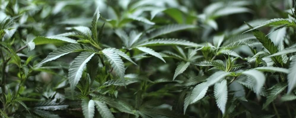 Carabinieri, controlli anti droga Preso con 60 grammi di marijuana