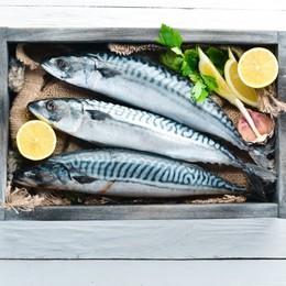 La stagione del pesce