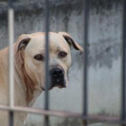 La versione della proprietaria del cane ucciso «Accoltellato in modo brutale»