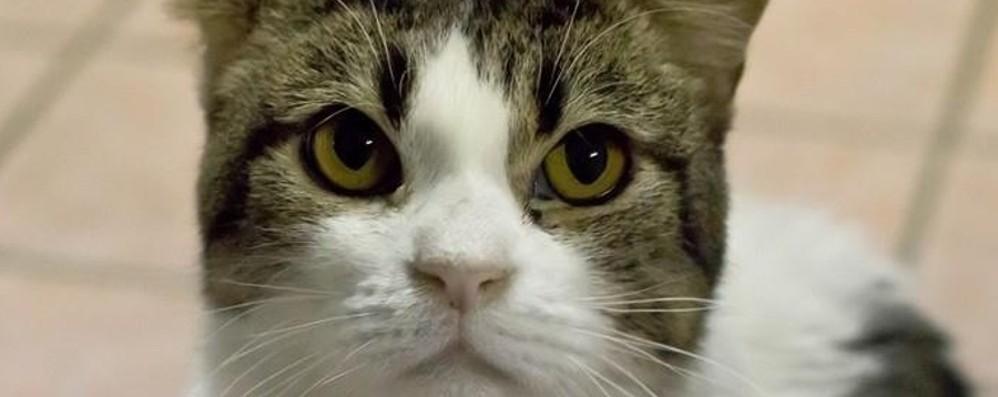 Maltratta il gatto, i vicini lo vedono Arriva la polizia e spintona gli agenti
