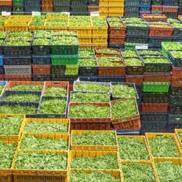 Calano le vendite delle verdure in busta Export al palo e meno consumi