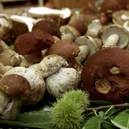 Funghi, in Bergamasca è corsa ai porcini Coldiretti, decalogo per una raccolta sicura