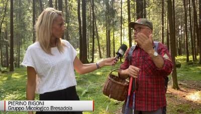 Funghi, i consigli dell'esperto Pierino Bigoni