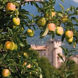 «Pomaria»: in Val di Non la raccolta delle mele