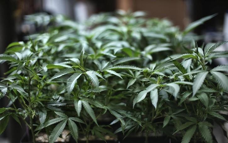 In casa aveva 50 kg di marijuana Arrestato 29enne a Valbrembo