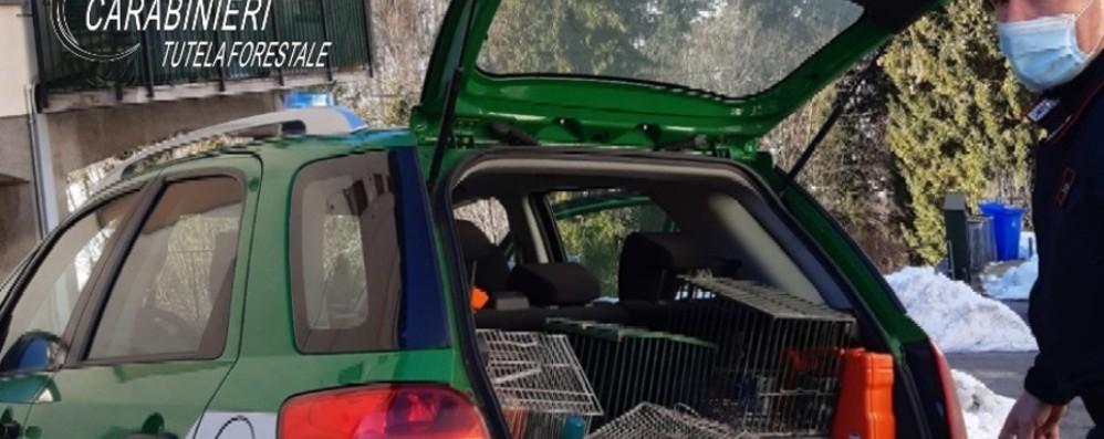 Trovate reti da uccellagione a Sedrina Sorpreso a macellare un capriolo: denunciato