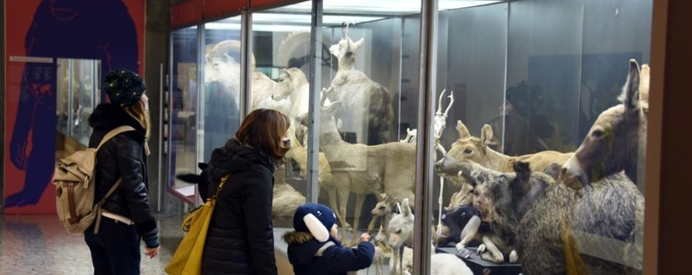 Carnevale al Museo di Scienze naturali Aperto anche lunedì 15 e martedì 16