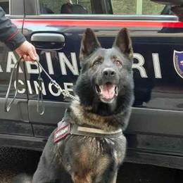 Cocaina nel pacchetto di sigarette Il cane antidroga la scova: arrestato