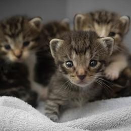 Comune di Bergamo, giornata del gatto Lanciato il progetto «tessera e pass»