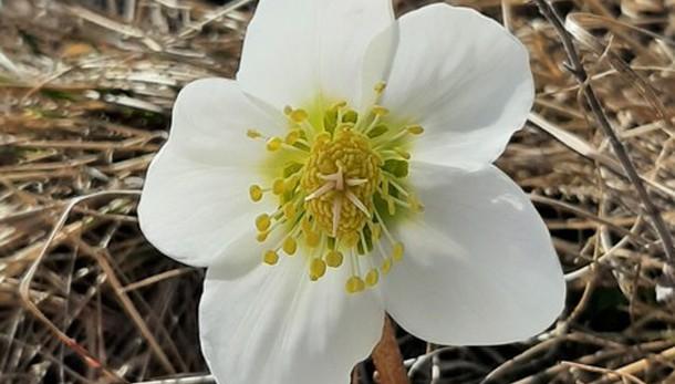 Candore di primavera