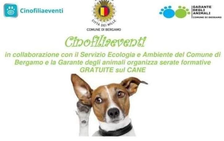 Come curare il proprio cane Un webinar gratuito
