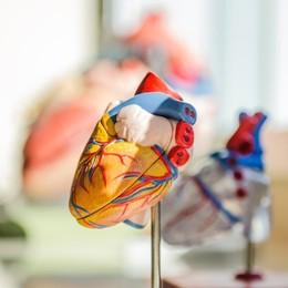 Dopo il Covid in forma grave «C'è il rischio di danni al cuore»